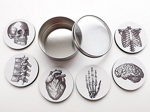 Anatomy Coasters Gift Set six 35 inch coasters brain skull anatomical heart human body skeleton doctor nurse graduation