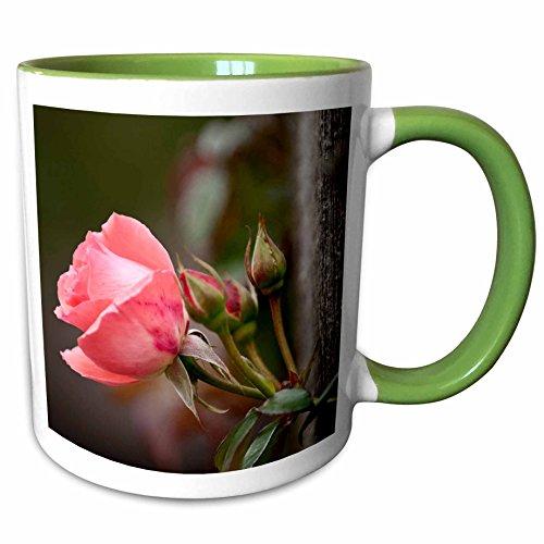 3dRose Danita Delimont - Michael Scheufler - Flowers - USA Kansas Pink Tea Cup Rose - 11oz Two-Tone Green Mug mug_191555_7