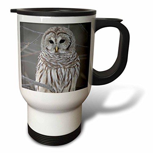 3dRose tm_21195_1 Barred Owl Travel Mug 14-Ounce Stainless Steel