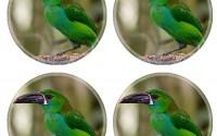 Custom-Coaster-Set-of-4-MSD-Unique-Printed-Coaster-Cup-Mat-Design-for-bird-feather-animal-beak-colorful-exotic-tropical-toucan-black-wildlife-nature-head-america-wild-zoo-13.jpg